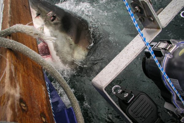 Scuba 2000 - filming Great White Sharks in South Africa