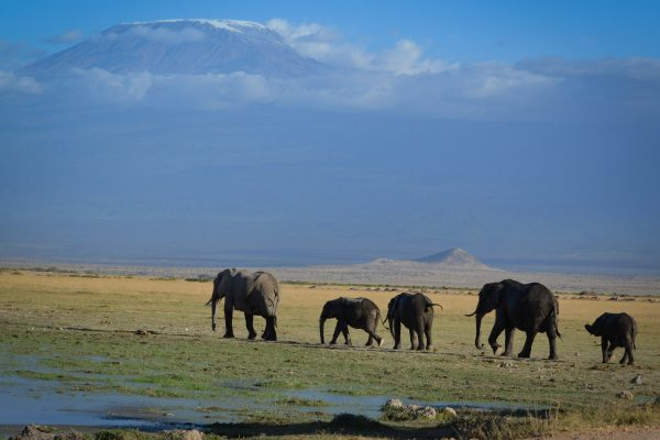 Travel-Tribe-Africa-Gallery-25