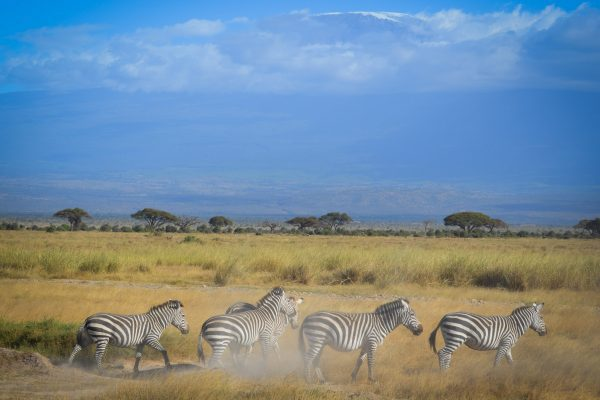 Travel-Tribe-Africa-Gallery-26