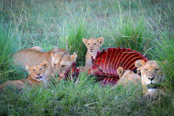 Travel-Tribe-Africa-Gallery-32